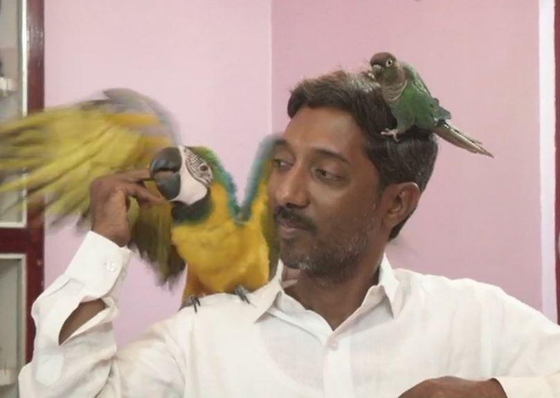 ऐसा प्यार! इस डॉक्टर ने पाल रखे हैं दुनिया के अलग-अलग देशों के 29 प्रजाति के तोते